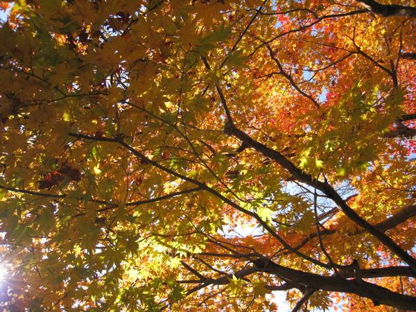 2008.11.25 京都--嵐山 (289).JPG