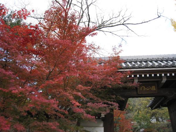 2008.11.26 京都--永觀堂 (5).JPG