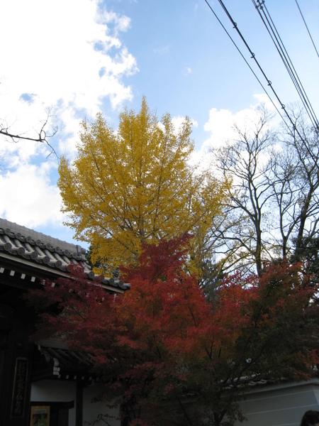 2008.11.26 京都--永觀堂 (6).JPG