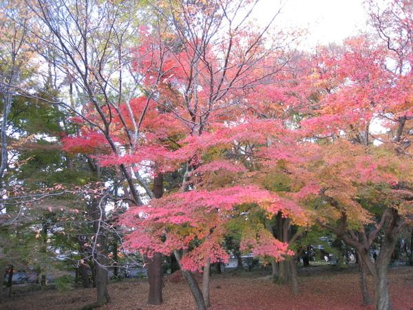 2008.11.26 京都--南禪寺 (11).JPG