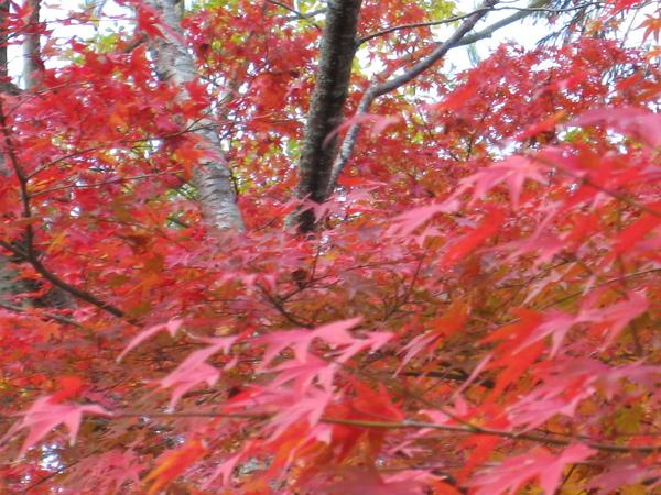 2008.11.26 京都--南禪寺 (18).JPG