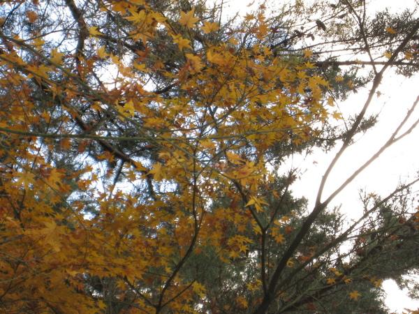 2008.11.26 京都--南禪寺 (24).JPG