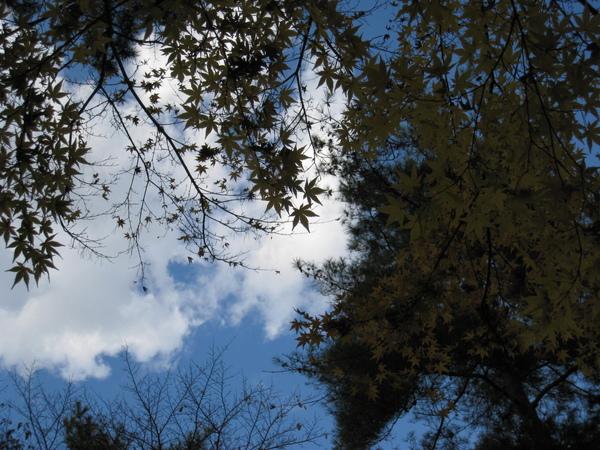 2008.11.26 京都--南禪寺 (37).JPG