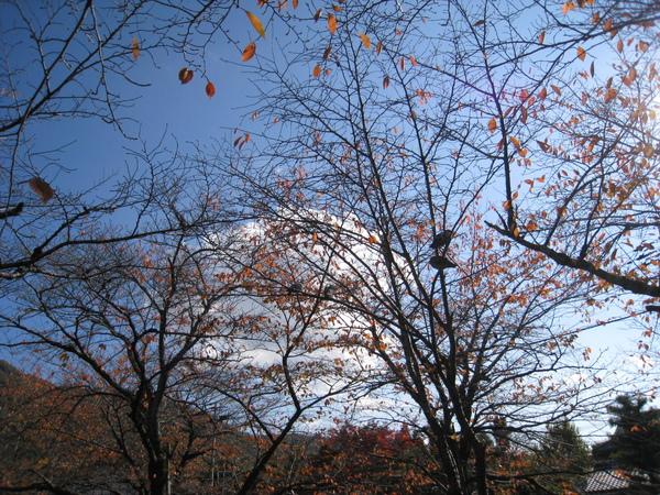 2008.11.26 京都--哲學之道 (14).JPG