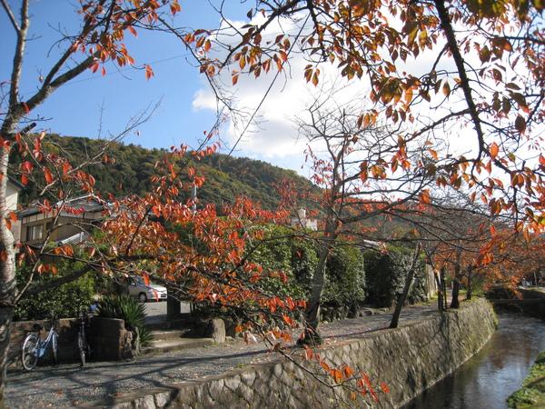 2008.11.26 京都--哲學之道 (23).JPG