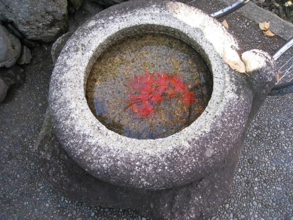 2008.11.26 京都--哲學之道 (27).JPG