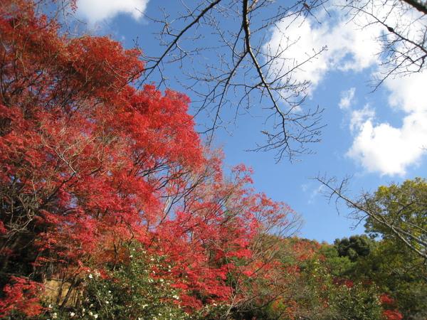 2008.11.26 京都--哲學之道 (44).JPG