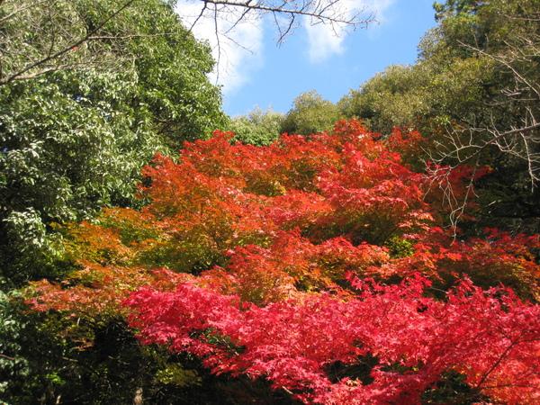 2008.11.26 京都--哲學之道 (48).JPG