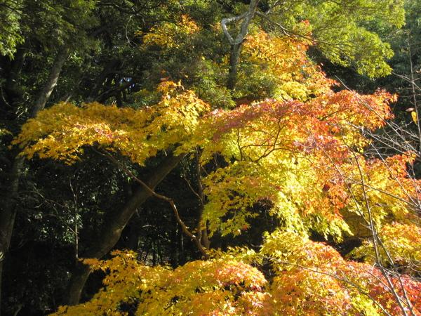 2008.11.26 京都--哲學之道 (51).JPG