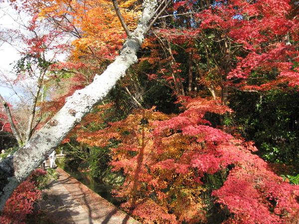 2008.11.26 京都--哲學之道 (64).JPG