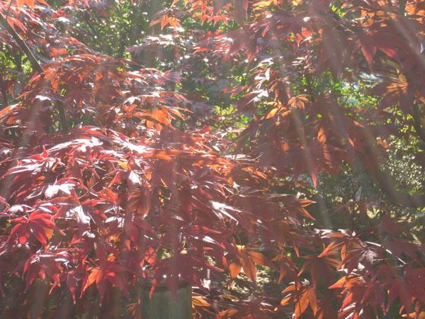 2008.11.26 京都--高台寺--天滿宮 (10).JPG