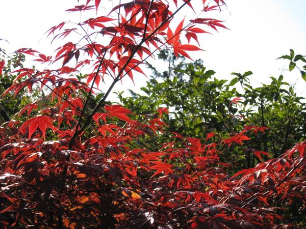 2008.11.26 京都--高台寺--天滿宮 (11).JPG