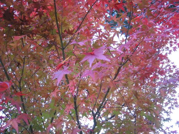 2008.11.26 京都--清水寺 (111).JPG