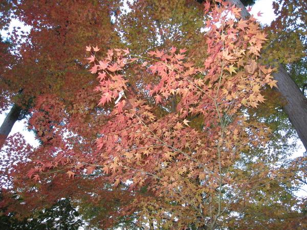 2008.11.26 京都--清水寺 (109).JPG