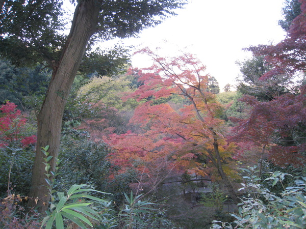 2008.11.26 京都--清水寺 (118).JPG