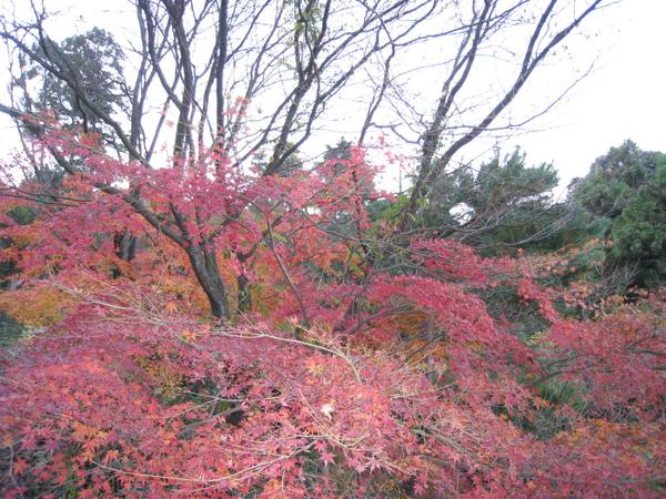2008.11.26 京都--清水寺 (119).JPG