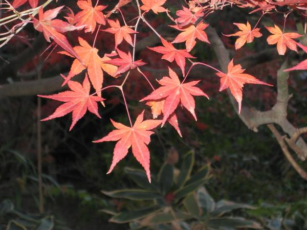 2008.11.26 京都--清水寺 (120).JPG