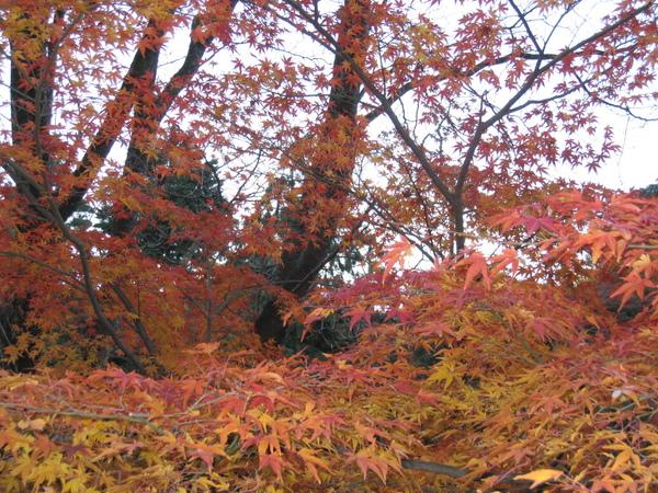 2008.11.26 京都--清水寺 (126).JPG
