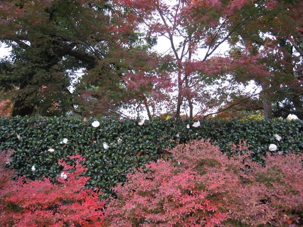 2008.11.27 京都--宇治--平等院 (26).JPG