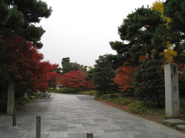 2008.11.27 京都--宇治--平等院 (3).JPG