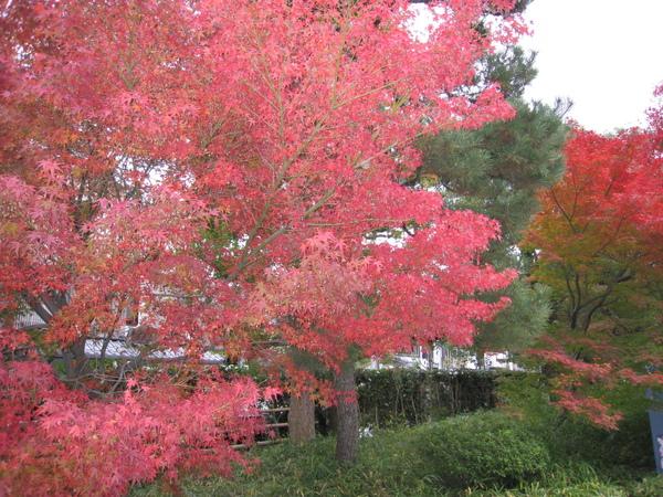 2008.11.27 京都--宇治--平等院 (4).JPG