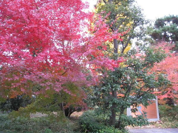 2008.11.27 京都--宇治--平等院 (16).JPG