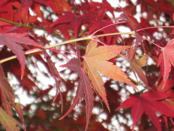 2008.11.27 京都--宇治--平等院 (20).JPG
