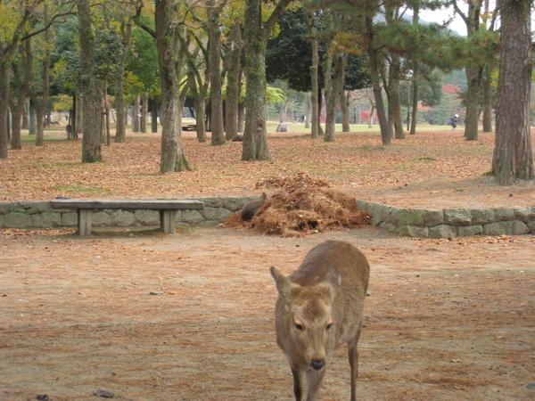 2008.11.27 京都--奈良--東大寺 (12).JPG