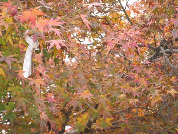 2008.11.27 京都--奈良--東大寺 (19).JPG
