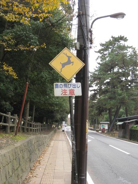 2008.11.27 京都--奈良--春日大社 (4).JPG