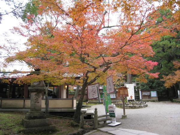 2008.11.27 京都--奈良--春日大社 (14).JPG