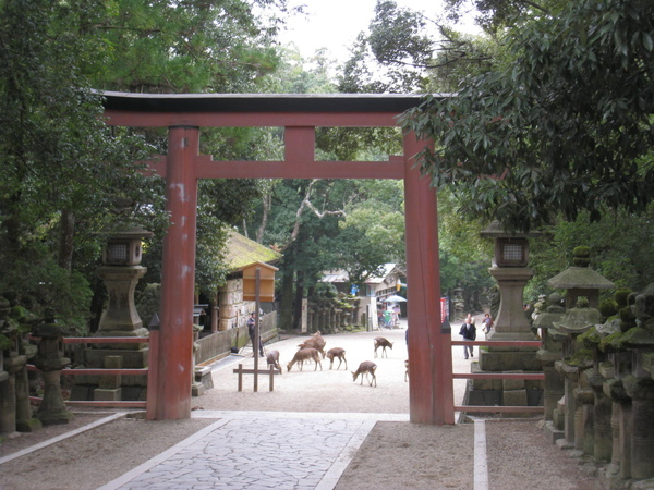 2008.11.27 京都--奈良--春日大社 (21).JPG