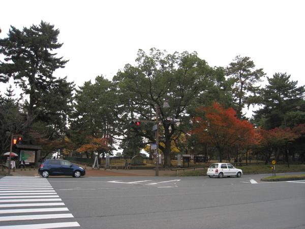 2008.11.27 京都--奈良--興福寺 (5).JPG