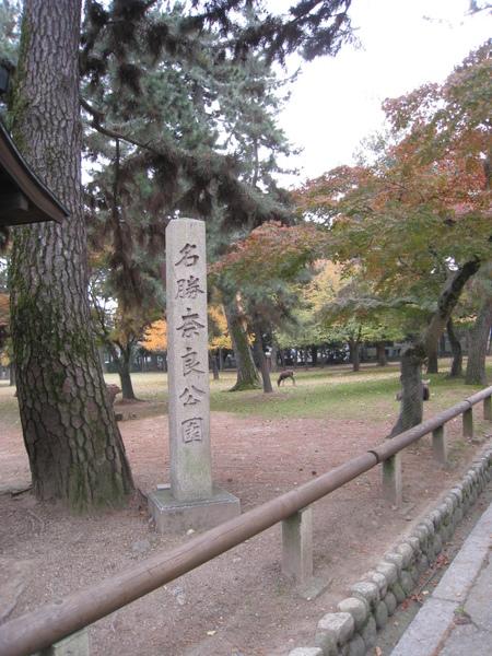 2008.11.27 京都--奈良--興福寺 (7).JPG