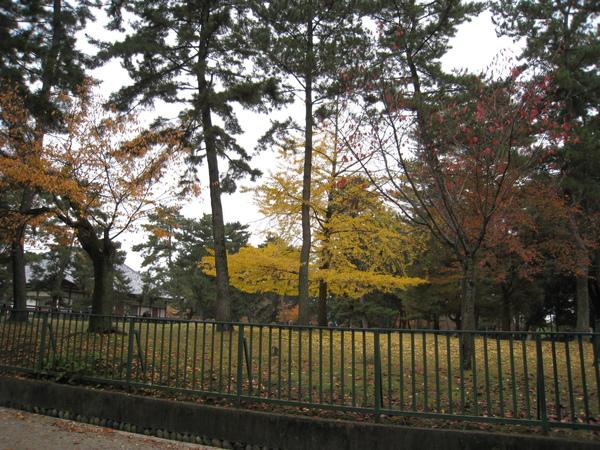 2008.11.27 京都--奈良--興福寺 (14).JPG