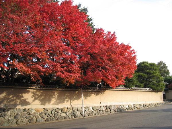2008.11.27 京都--東福寺 (7).JPG