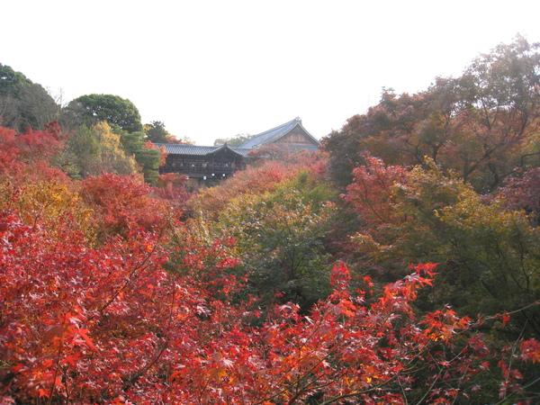 2008.11.27 京都--東福寺 (25).JPG