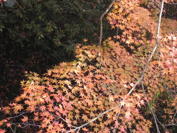 2008.11.27 京都--東福寺 (26).JPG