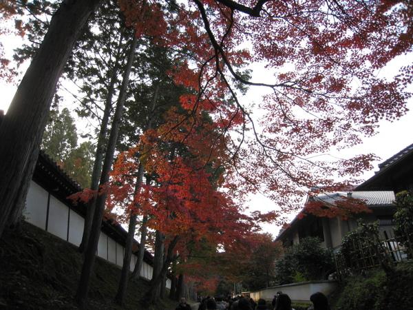 2008.11.27 京都--東福寺 (31).JPG