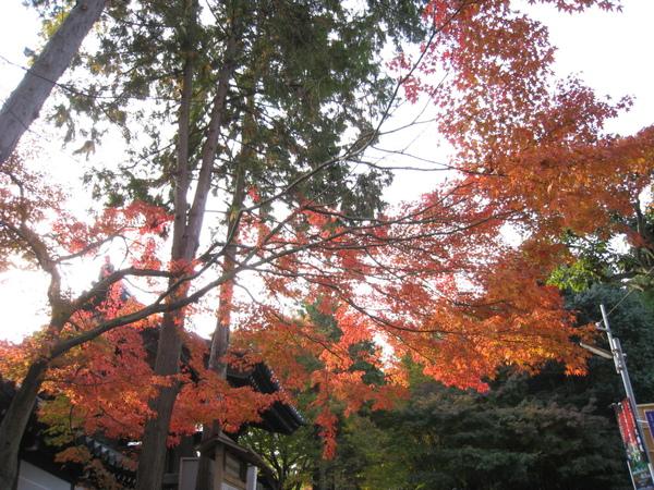 2008.11.27 京都--東福寺 (36).JPG
