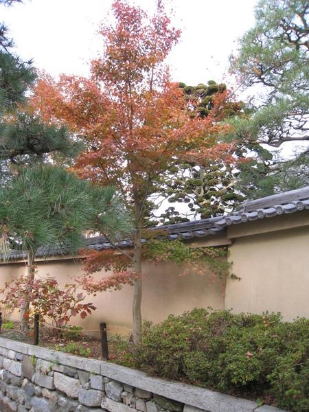 2008.11.27 京都--東福寺 (52).JPG