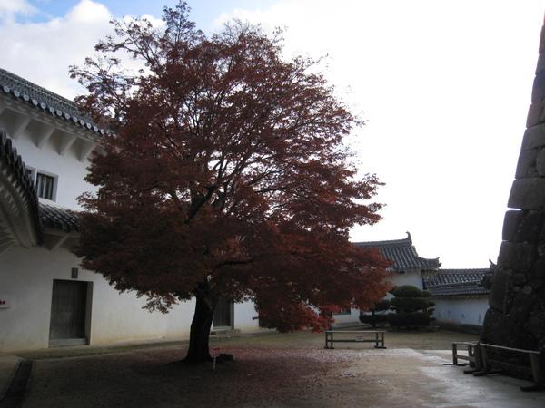 2008.11.28 大阪--姬路城 (68).JPG