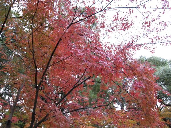 2008.11.25 京都--金閣寺 (3).JPG