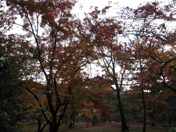 2008.11.25 京都--金閣寺 (38).JPG