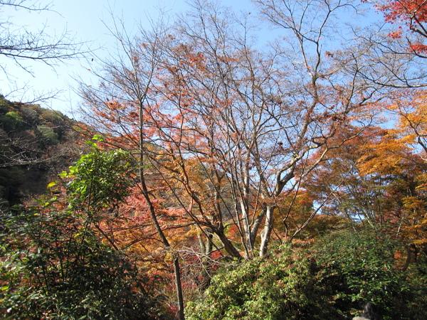 2008.11.25 京都--嵐山 (2).JPG