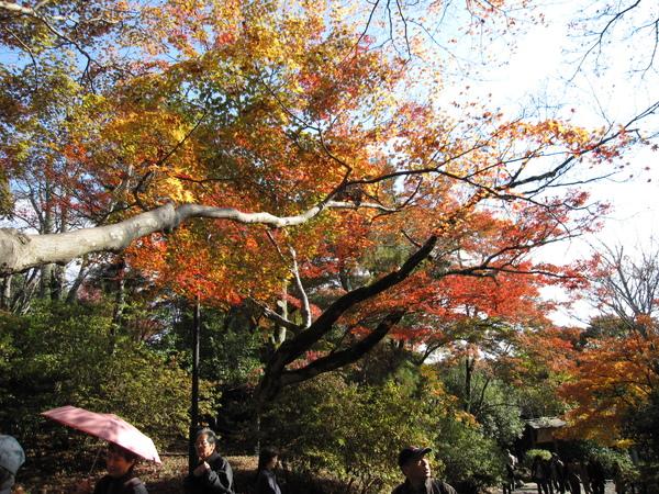 2008.11.25 京都--嵐山 (6).JPG