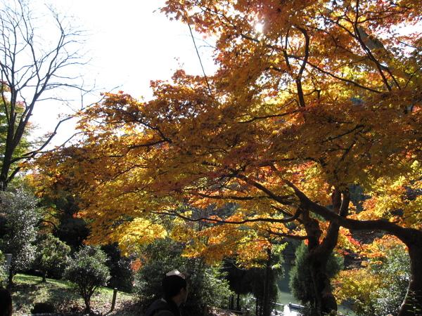 2008.11.25 京都--嵐山 (14).JPG