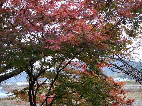 2008.11.25 京都--嵐山 (184).JPG
