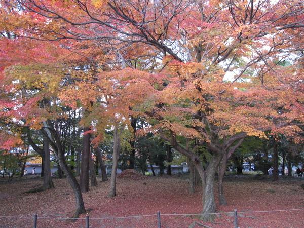 2008.11.26 京都--南禪寺 (2).JPG