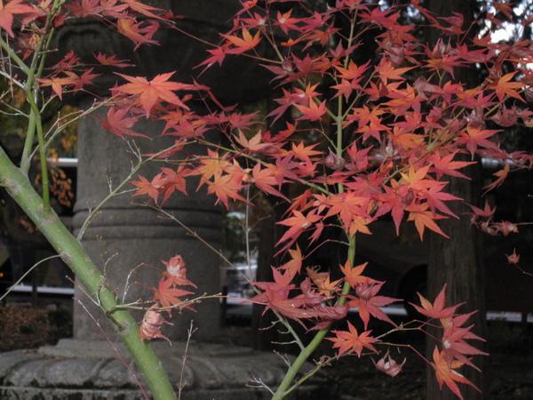 2008.11.26 京都--南禪寺 (15).JPG